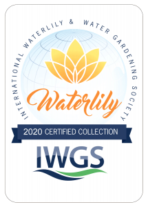 2020 IWGS Certified Collection of Waterlily